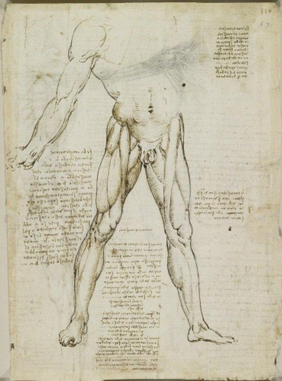 Leonardo Da Vinci, Un Visionario del Renacimiento. – rincondelpasado