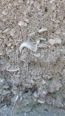 Niveles con restos