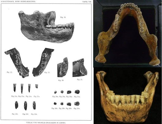 Mauer mandible